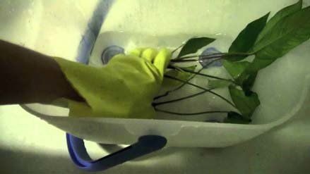 How To Disinfect New Plants