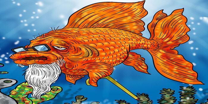 Goldfish life span how long do goldfish live oldest goldfish for Koi fish life span